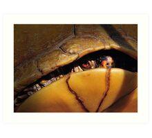 Eastern Box Turtle (three-toed Box Turtle) Art Print