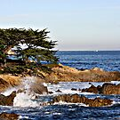 &quot;Cypress By The Sea&quot; by Gail Jones