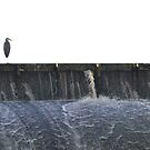 Blue Hereon on Dam  by mwfoster