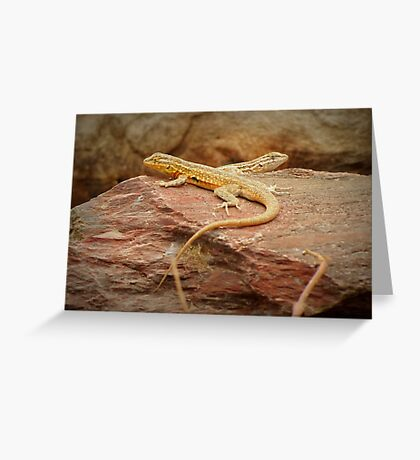 Common Side-blotched Lizard (Pair) Greeting Card
