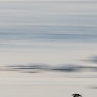 Arctic Flight by barrach