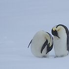 Penguins in a Snowstorm by barrach
