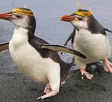 Royal Penguins by barrach