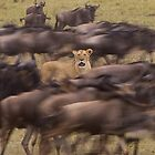 Lion in the Crowd by barrach