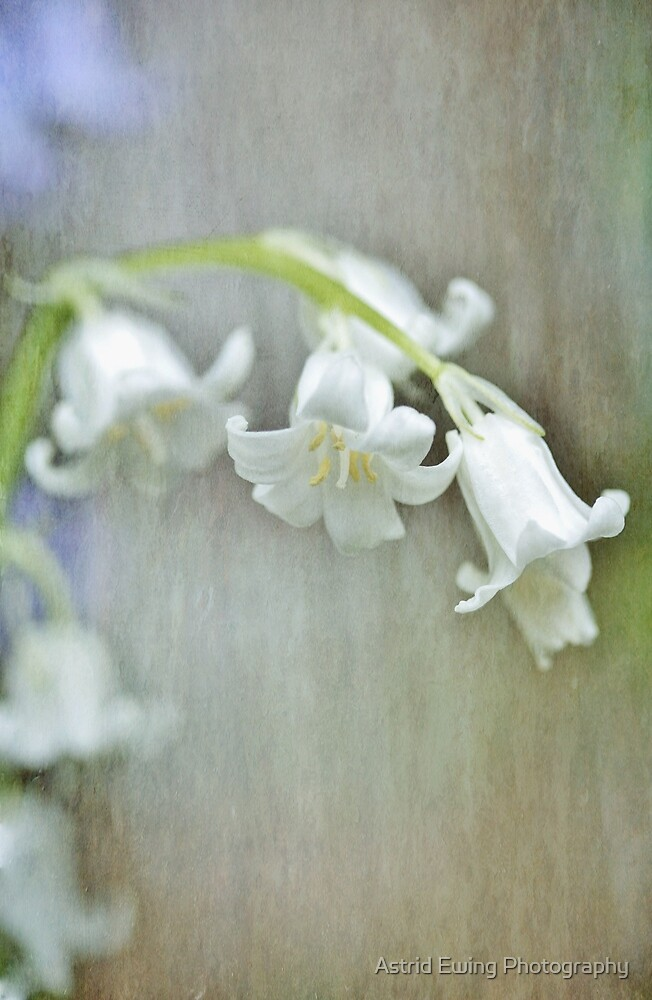 White bluebell...happily different by Astrid Ewing Photography