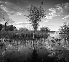 Swamp Stand by Bob Larson
