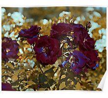 Roses Tune to Bordo Poster