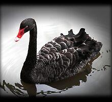 Black Swan by RusticShiraz