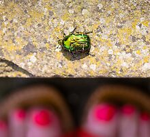 May Bug Cockchafer by Heather Buckley
