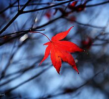 Autumn in action by Adrian Tusek