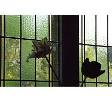 Flowers Inside and Outside! Photographic Print
