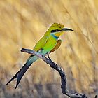 Bee Eater at Sunset.......... by Macky