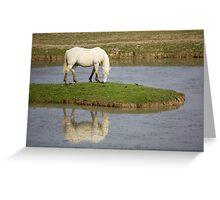 The Camargue Horse Greeting Card