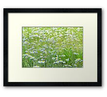 Daisies Gone Wild Framed Print