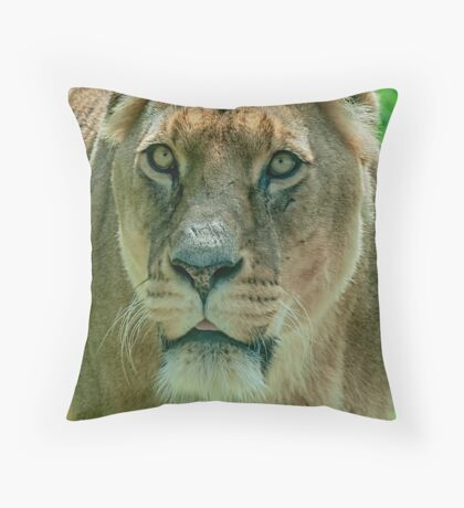 Lioness Female Lion 2 Throw Pillow