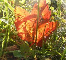 Illuminated Leaf. by SunshineStone