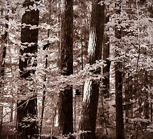 Misty Forest In Sepia Tones by Diane Schuster
