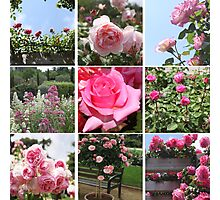 Garden with roses Photographic Print