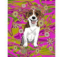 Jack Russell Terrier Photographic Print