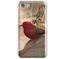 Red-billed Firefinch iPhone Case/Skin
