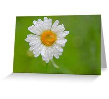 Daisy Dew Greeting Card