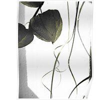 Dry flower 3 Poster