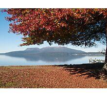 autumn tree 2 Photographic Print