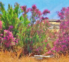 Spring Desert Color by marilyn diaz