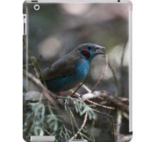 Red cheeked cordonbleu iPad Case/Skin