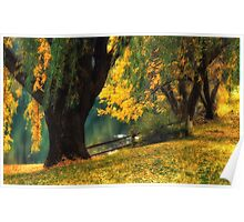 Pond Willows Poster
