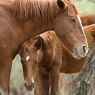 Salt River Wild Horses by Sue  Cullumber