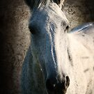 white horse portrait by RiccardoFranke