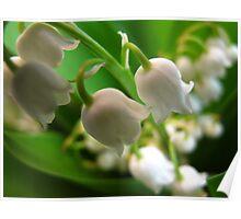 Miniature Muguet Bells Poster
