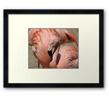 Pink, Pink!! Framed Print
