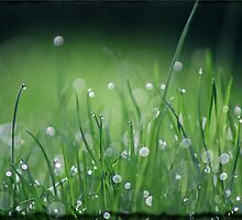 Morning Dew by Crista Peacey