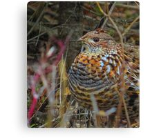 partridge not in a pear tree Canvas Print