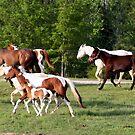 Horses by Ginger  Barritt