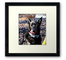Black Lab/German Shepherd Framed Print