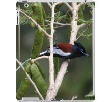 African paradise flycatcher iPad Case/Skin