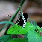 Black and White Butterfly by Meghan1980