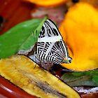 Zebra Mosaic Butterfly by Meghan1980