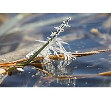 Ice Crystals on Grass Blade Photographic Print