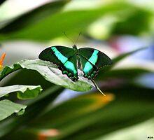 Emerald Swallowtail by Meghan1980