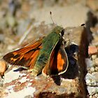 Spring Skipper by Arla M. Ruggles