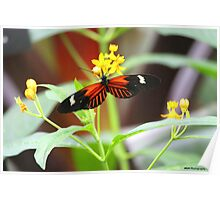 Red, white and black butterfly Poster