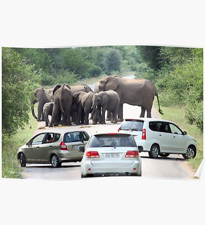 WHEN TO BACK OFF! THE AFRICAN ELEPHANT - Afrika Olifant Poster