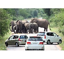 WHEN TO BACK OFF! THE AFRICAN ELEPHANT - Afrika Olifant Photographic Print