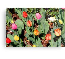 Multi-colored tulips Metal Print