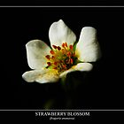 Strawberry Blossom (fragaria ananassa) Labeled by Alan Harman