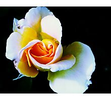 Beautiful Bloom Photographic Print